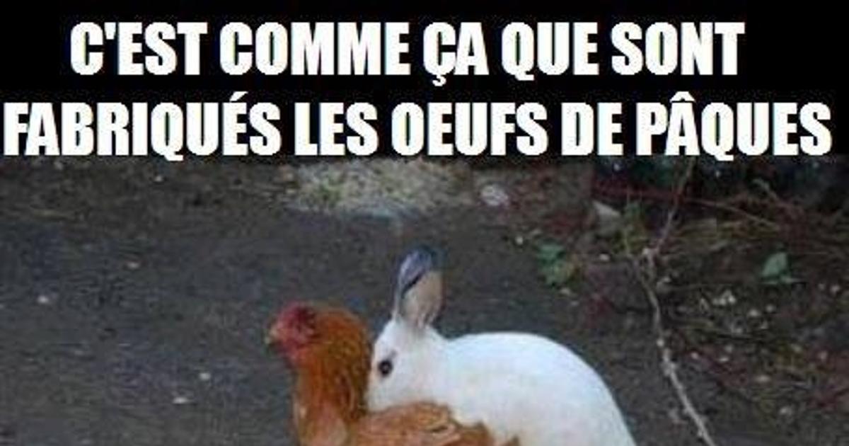 Trop drôle :) - RIGOLOTES.fr