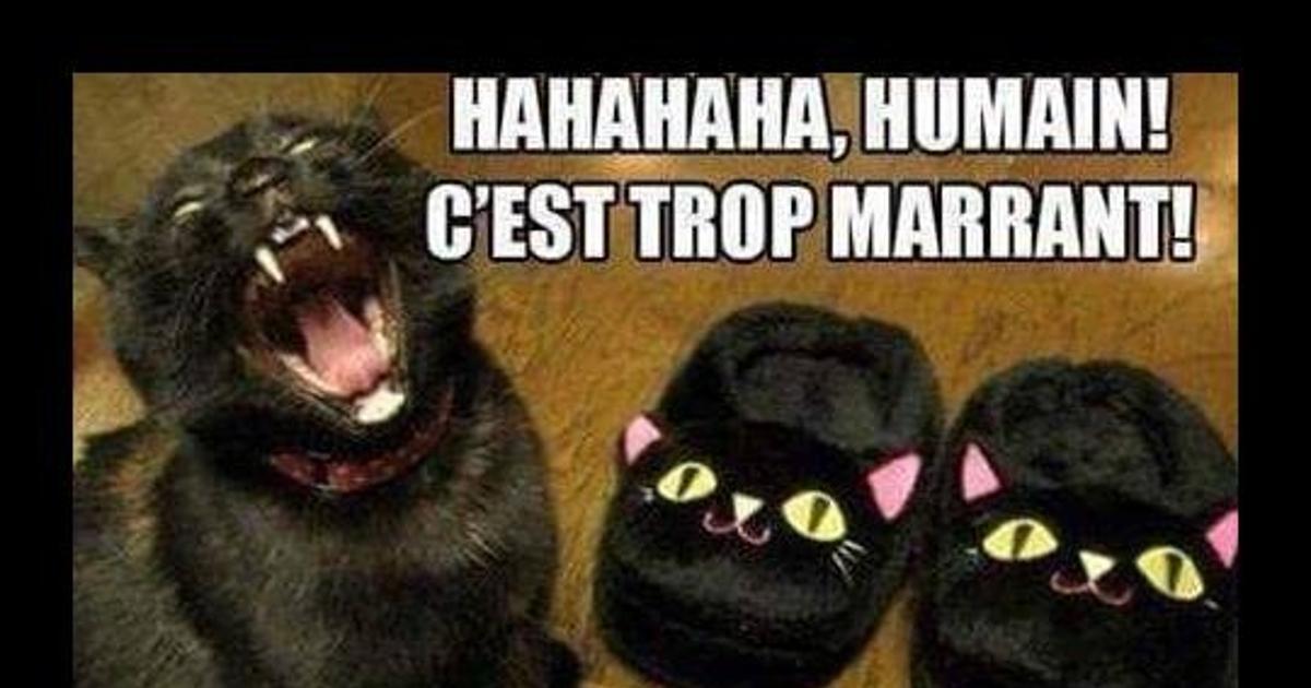 Hahahaha, humain! - Blagues et les meilleures images drôles!
